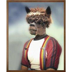 Anthony Alpaca Canvas
